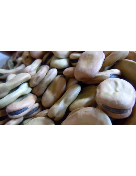 Gines Martínez Extra special dried beans for Michirones sack of 10 kg.